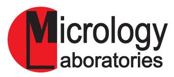 Micrology Labs old logo